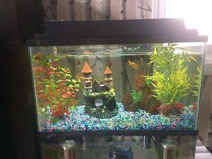 Fish aquarium mint condition complete set