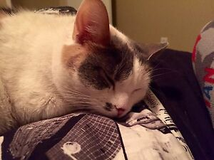 Free cat to loving home