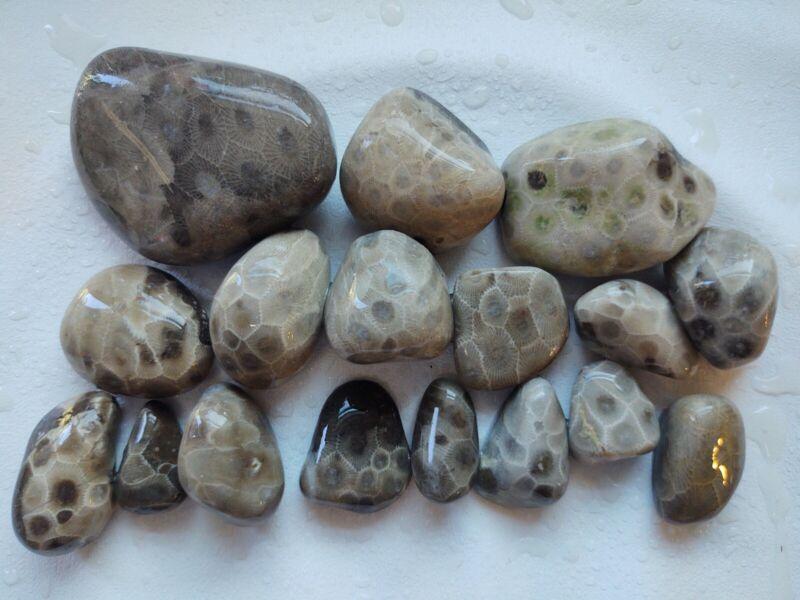 17 Unpolished Petoskey Stones Hexagonaria Michigan Fossil~ Great for Polishing!!