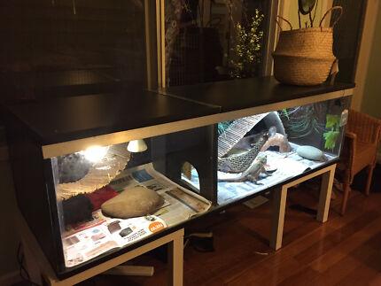 Reptile Enclosure - URGENT SALE