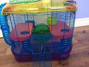 Hamster cage food and running ball