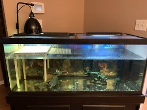 Red Eared Slider Turtle and 75 Gallon Tank