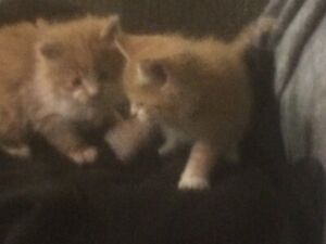Kittens in need of a home
