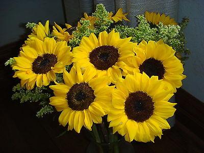kansassunflower-6