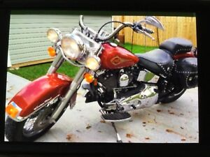 1989 Harley softail classic
