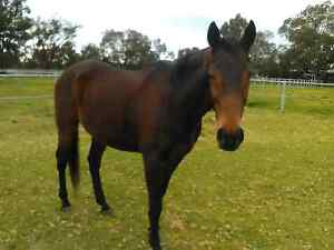 Looking to rent house on horse property Rockingham Rockingham Area Preview