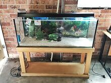 "FULL SET AQUARIUM 4 ft x 13"" x 40"" with lighting, filter etc Kingsford Eastern Suburbs Preview"