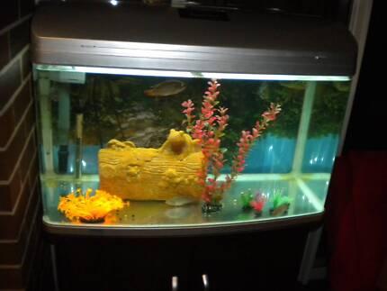 Aqua One fish tank AR 850 + canbinet Amaroo Gungahlin Area Preview