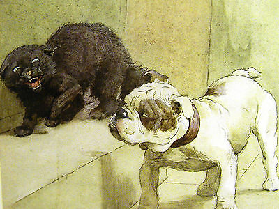 Cecil Aldin CUTE BULLDOG & HISSING BLACK CAT 1913 BULL DOG Antique Print Matted