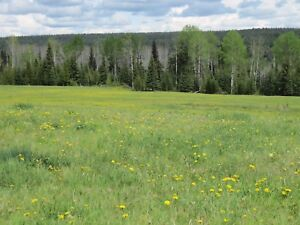 Beautiful 460 acres in the Cariboo