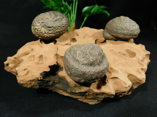 Three BIG! Moqui Marbles on a Natural Eroded Sandstone Formation Utah 1848gr