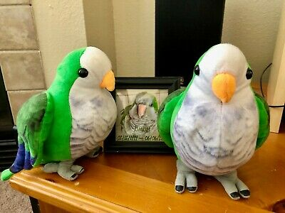TomTom the Quaker Parrot very squeezable Stuffed Bird - 8 inches tall
