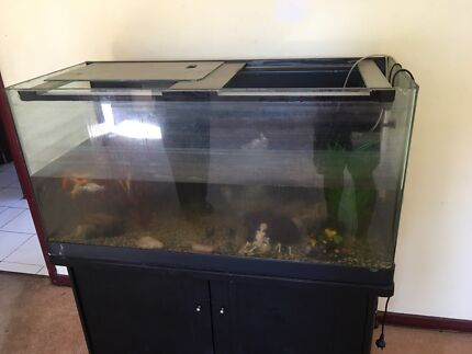 """Fish tank 4"""" - with fish & filter & water pump (heavy)"""