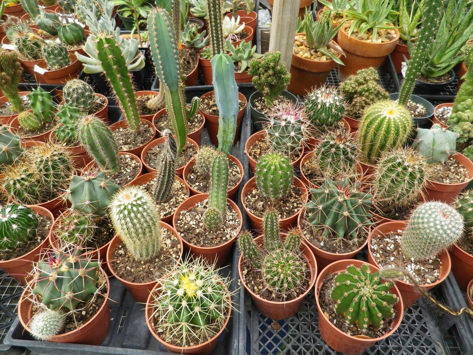 Aloe Cactus&Succulent Xeric Plants.