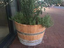 Healthy olive tree & wine barrel Balcatta Stirling Area Preview