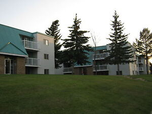 TON of Natural Light! Great 2 Bedroom Apartment!