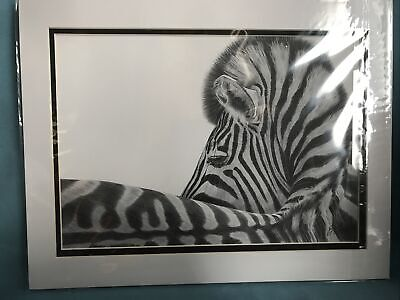 Pencil Drawing Zebra Looking Back By Gary Tymon