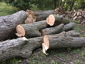 SILVER MAPLE FIREWOOD