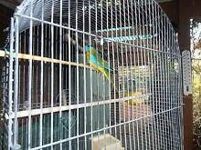 Small Parrot and Cage Adelaide Region Preview