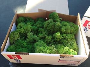 200g Bag Lichen Moss Model Scenery Tree Hedge Train Set HORNBY Battle WAR Slot
