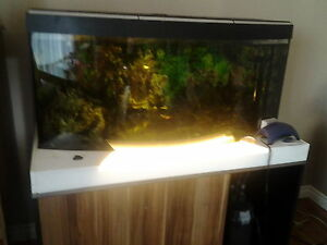 huge fish aquarium with a beautiful cabinet