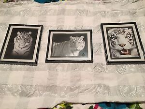Set of 3 tiger pictures Carrum Downs Frankston Area Preview