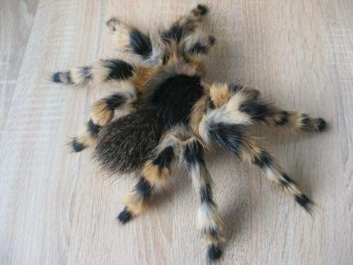 Entomologist Gift Realistic Tarantula Spider Sculpt Entomological Art Insect