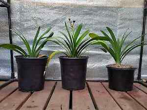 Various plants - starting from $5 Engadine Sutherland Area Preview