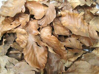 400 8L Organic Dried Beech Leaves Leaf Litter Reptiles Isopod Bioactive Insects