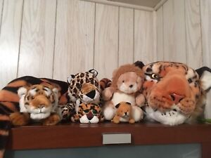 Tiger teddy collection