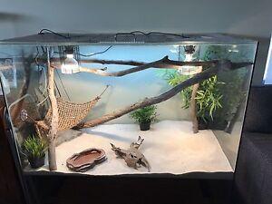 Reptile enclosure The Vines Swan Area Preview
