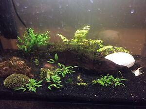 Aquarium plants Bassendean Bassendean Area Preview