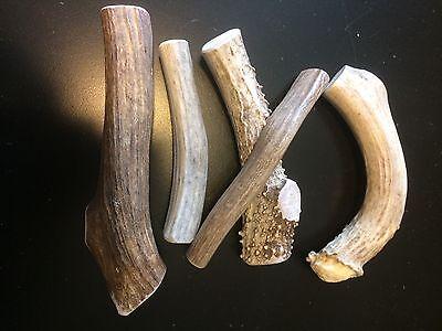 1 pound of Small/Medium Elk/Deer Whole Antler Dog Chew Mix-All Natural-Great Buy (Buy Deer Antlers)