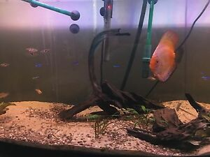 Fish & 72-gal Aquarium with all accessories for sale