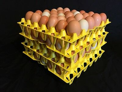 50 Egg Trays -chicken Egg Trays - Incubator Egg Trays - Was-30 Stackable Plastic