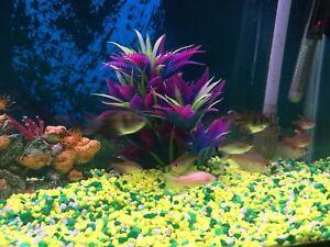 55 gallons fresh water fish tank
