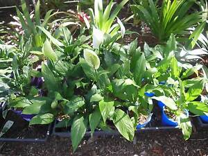 Plants for sale Stafford Brisbane North West Preview
