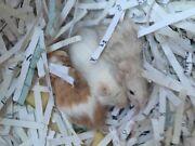 3 Mice- PETS  Eden Hill Bassendean Area Preview