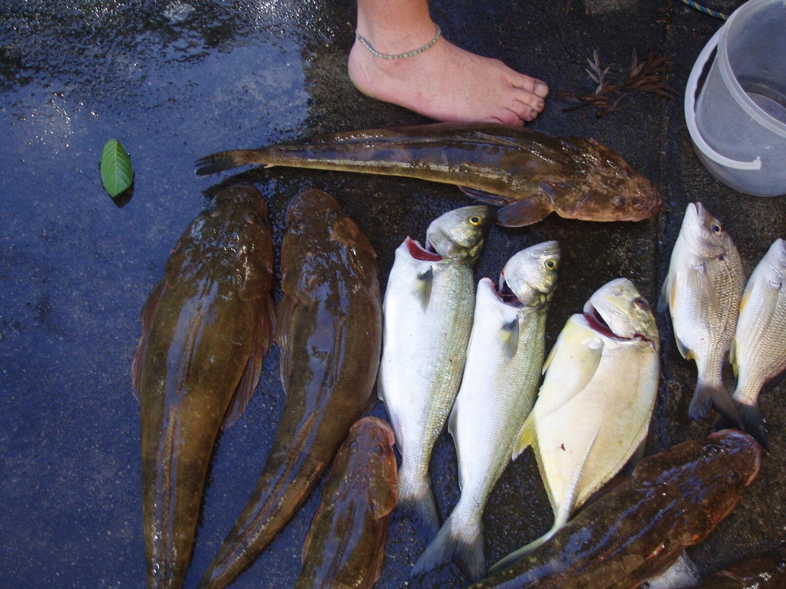 fishingandgardening