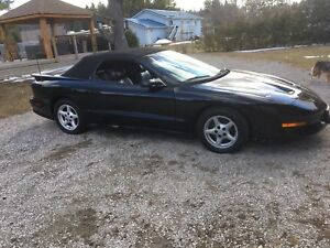 1996 firebird Tans am
