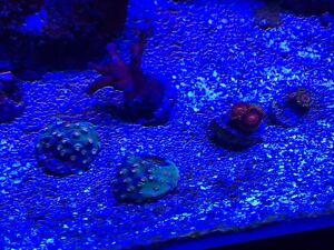 Frags 10$ Ea 5 or more