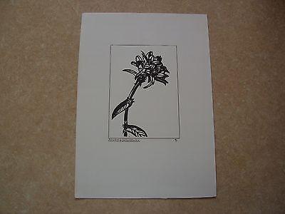 Original Handzeichnung 14x21cm Büschelglockenblume.Signiert.