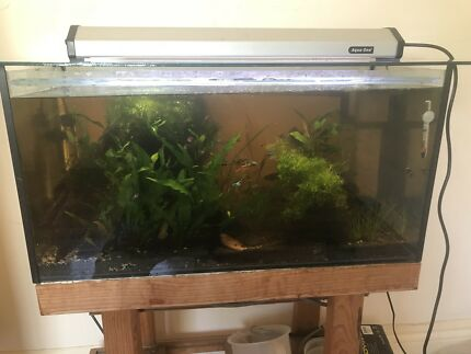 Fully set up fish tank all included