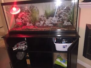 Herman's Tortoise, tank, cabinet and accessories