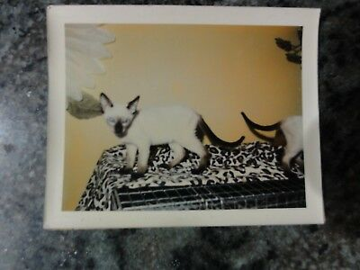 Vintage Polaroid Photo of Siamese Twin Cats On Leopard Blanket on Cage