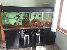 6 foot, 540L tropical aquarium with stand Enmore Marrickville Area Preview