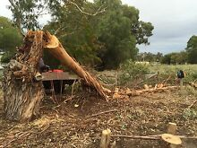 Property clean up and tree removal Balcatta Stirling Area Preview