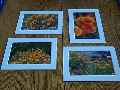 - Poppies Photographs Set of 4, 4x6 prints matted to 5x7 DIY to your 5x7 Frames
