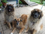 The Three Leos
