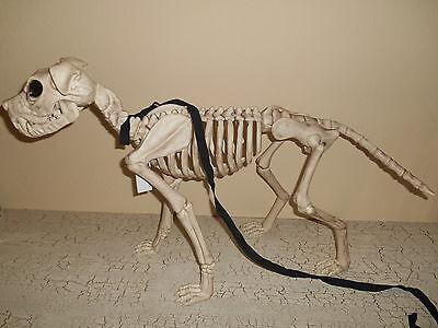 White Skeleton Dog On Leash Halloween Decoration Scary - Halloween Dog Skeleton On Leash
